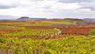 Vineyards in Rioja Baja